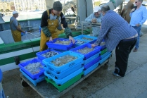 Unloading the day's catch