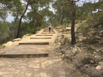 The final stretch: the flight of steps leads you up through the pine trees to the tower itself.