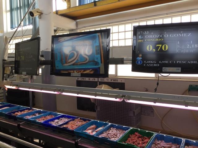 Fish auction Villajoyosa