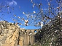 Puente Nuevo with spring blossom